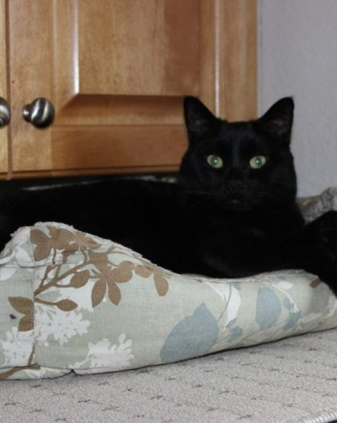 Black Cat in the Box.