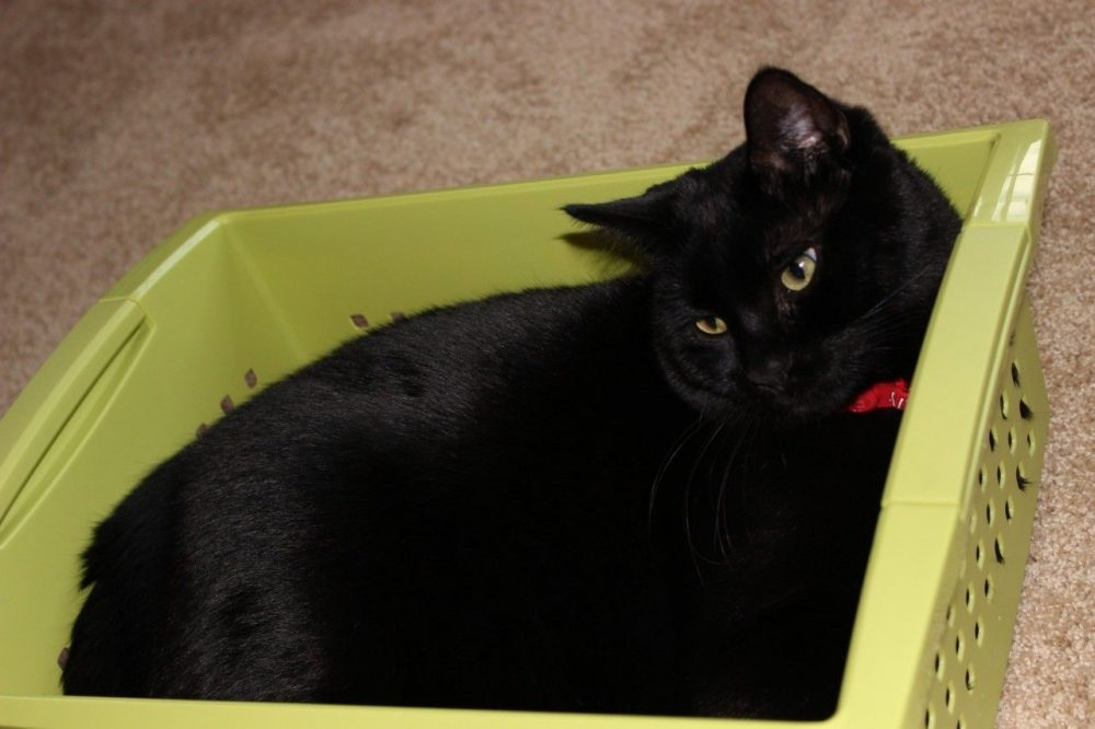 black cat in the box