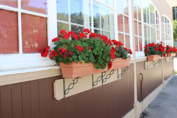 planter ideas, geranium planters,