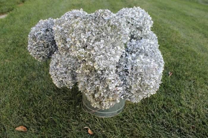 Silver hydrangeas.