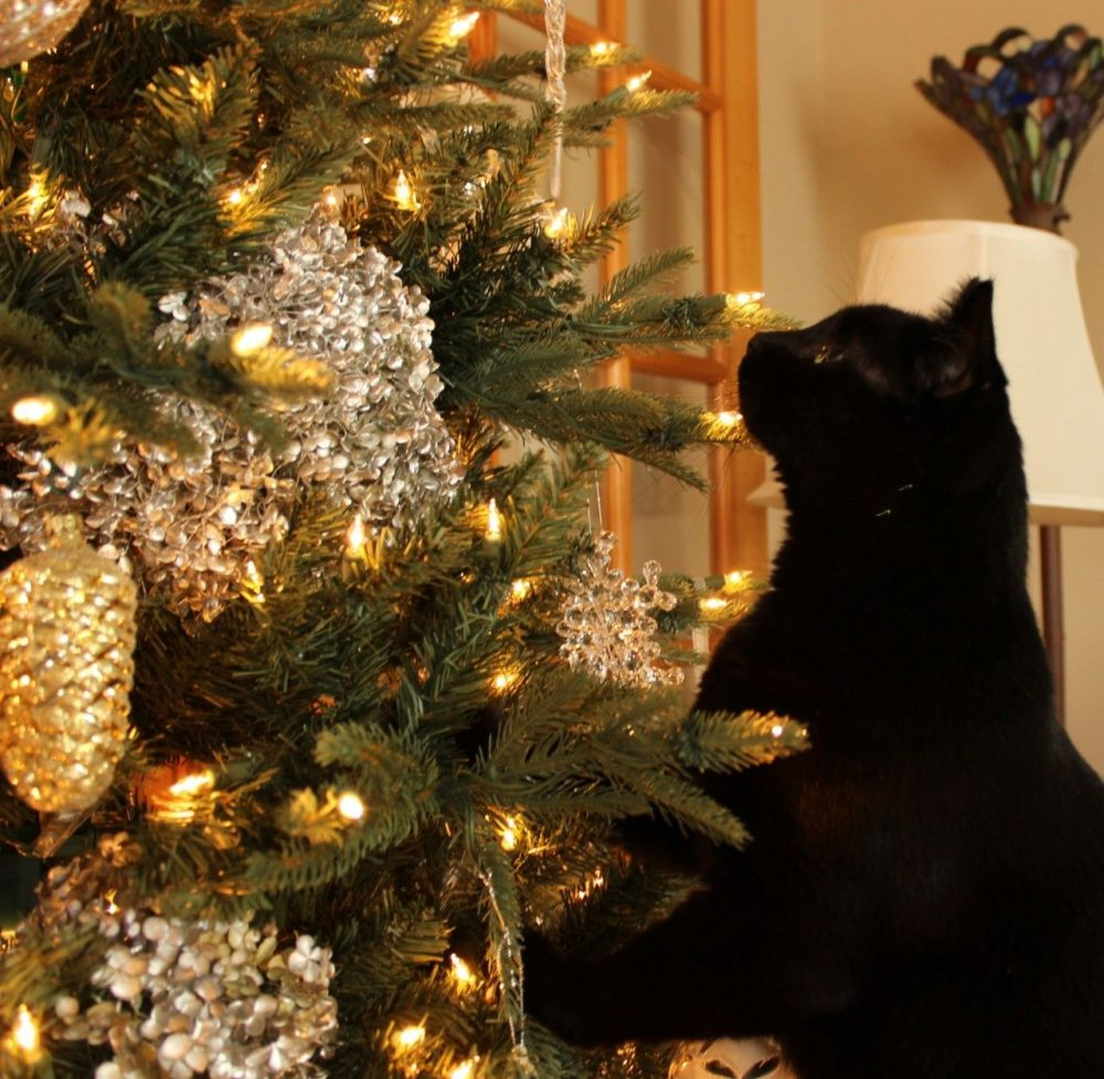 Vacuuming My Christmas Tree Momcrieff