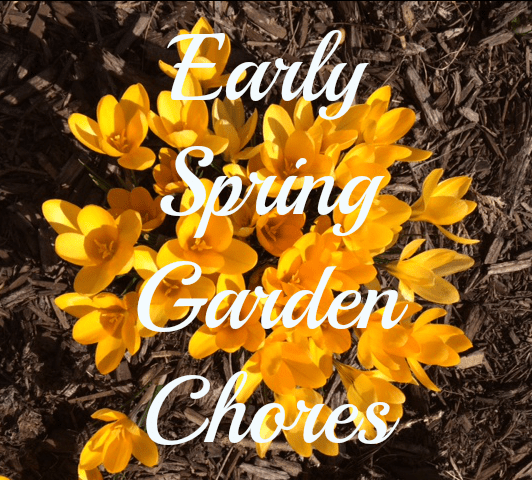 Early Spring Garden Chores.  Do a little now, so there isn't so much to do later!  Helps you get organized.