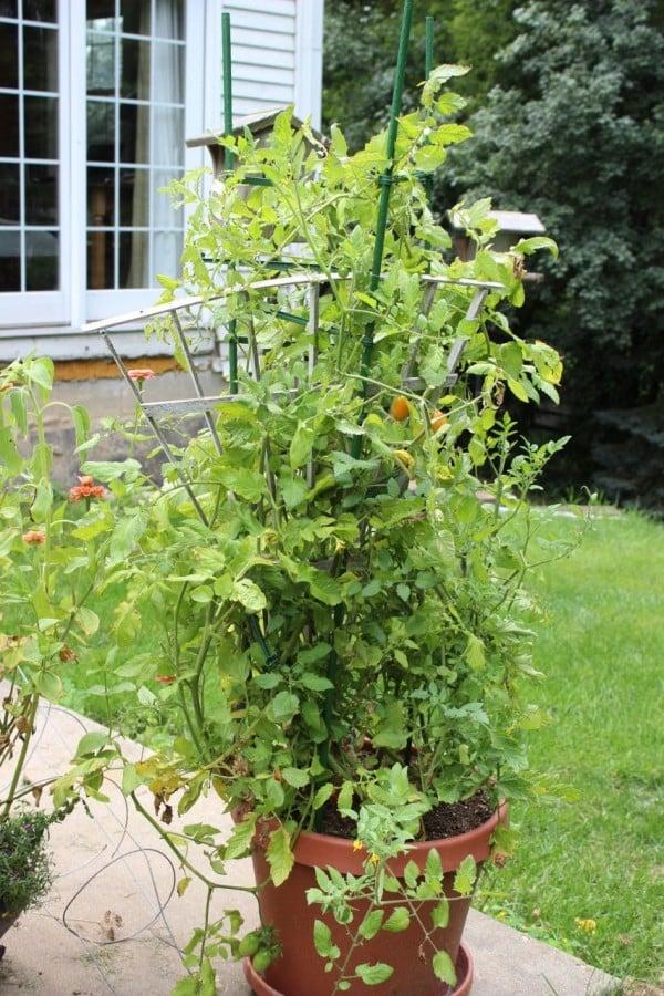 Planter - tomatos