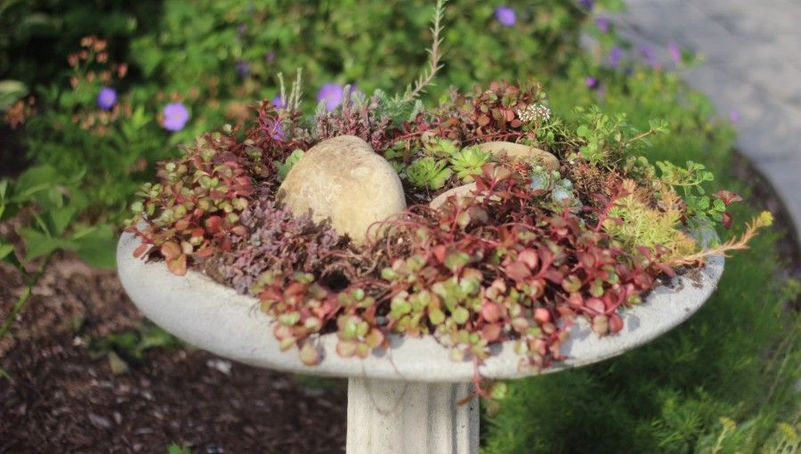 succulent bird bath