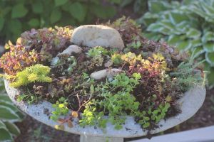 20 plus container gardens from my neighborhood