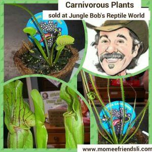 carnplant photo grid