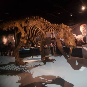 american museum of natural history 5