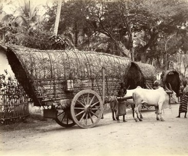 Bullock Cart [Image Courtesy: www.imagesofceylon.com ]