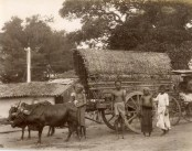 Bullock Cart with Natives and Native Boys