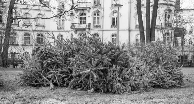 wsv_weihnachtsbaum-03388