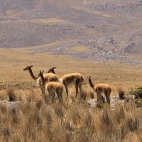 Family Travel Peru