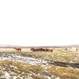 cavalos, ervas, neve, vento, Oeste Islândia