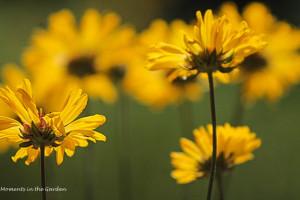 Wildflowers, yellow
