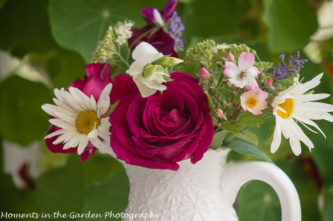 Nature at its Best - MOMENTS IN THE GARDEN PHOTOGRAPHY