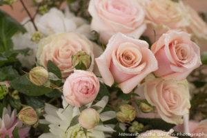 pastel-pink-roses