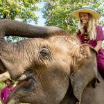 Chiang Mai – The Rose of the North