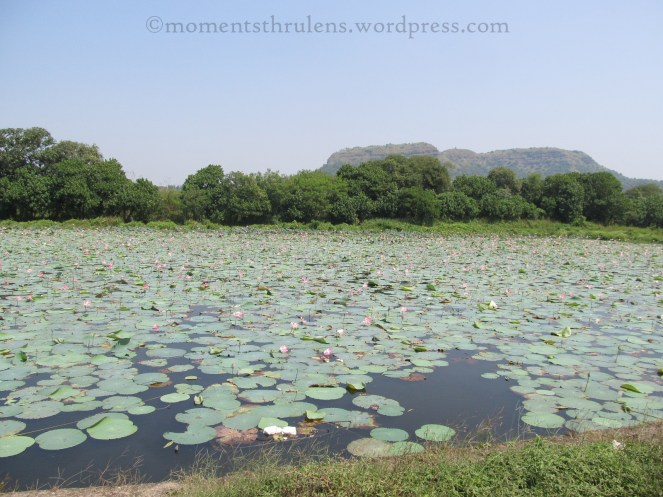 First time seeing Lotus Pond. And got it in my camera.