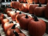 Cleveland Pumpkin Patches!