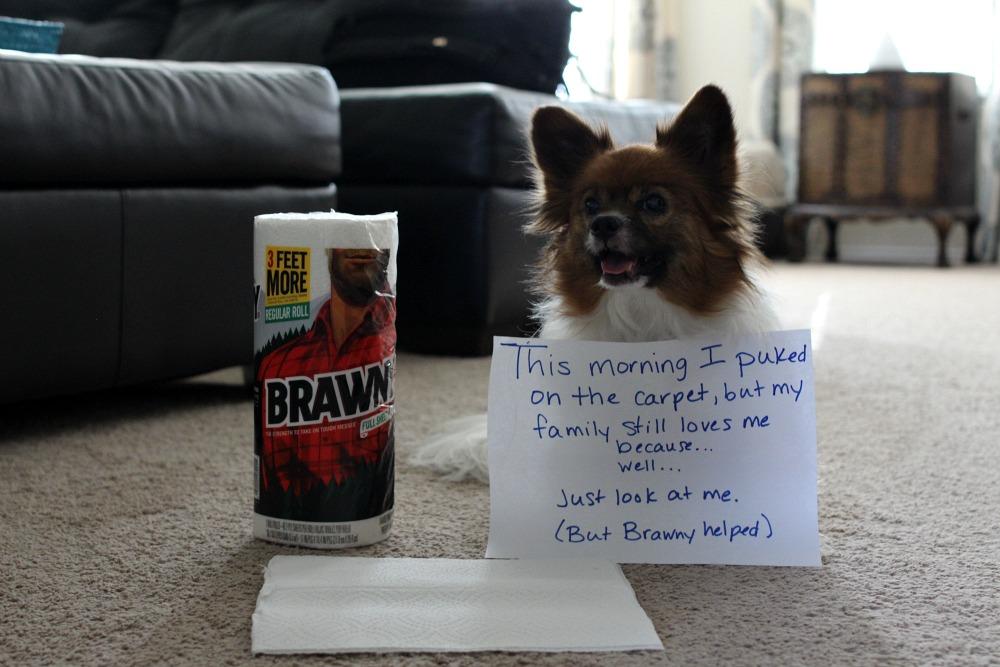 how to get dog vomit out of carpet floor matttroy. Black Bedroom Furniture Sets. Home Design Ideas