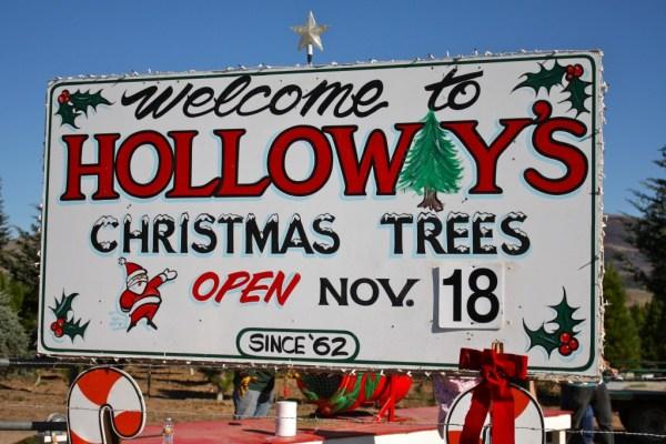 Holloway's Christmas Trees