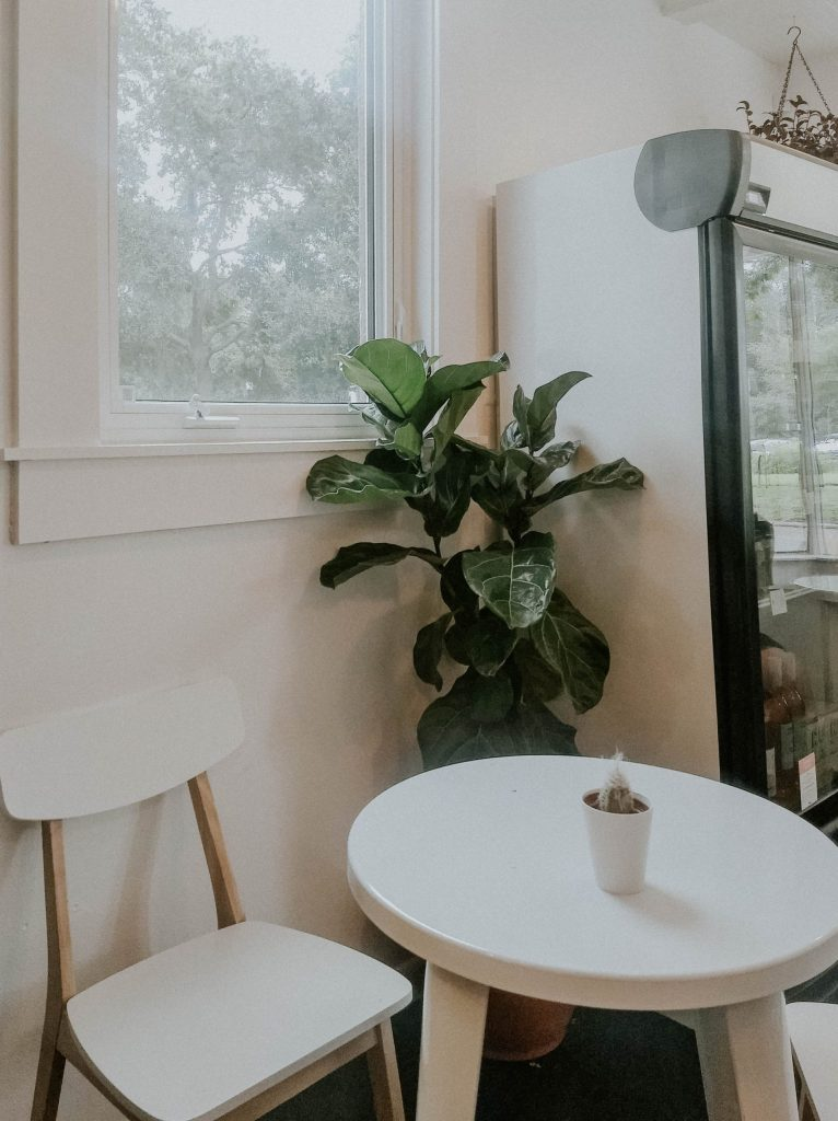 fiddle leaf fig tree indoors house modern