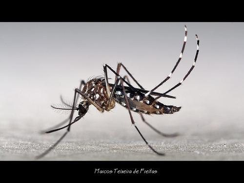 寶寶被蚊子叮!五個最佳防蚊方法