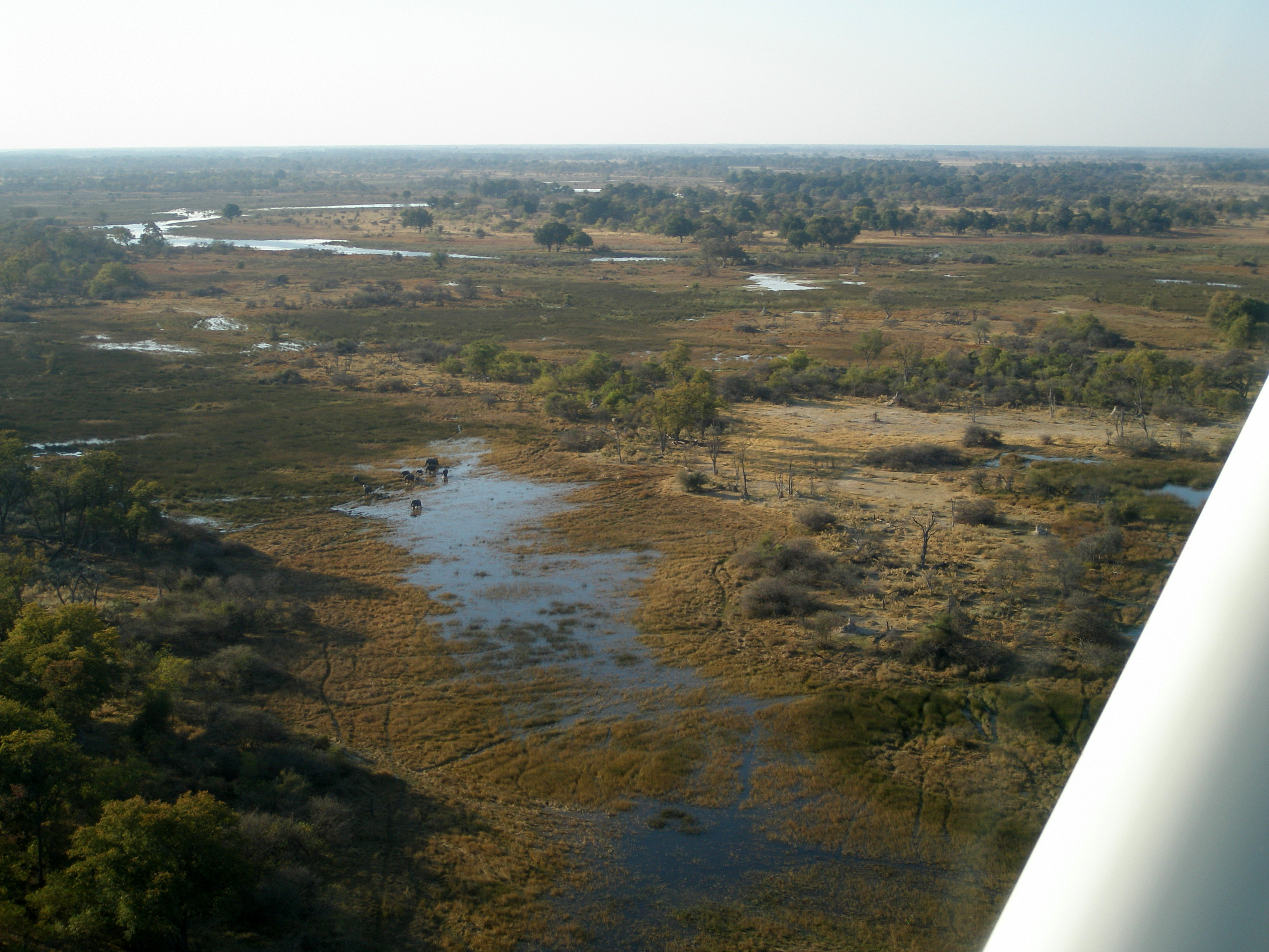 Okavango-elefanter