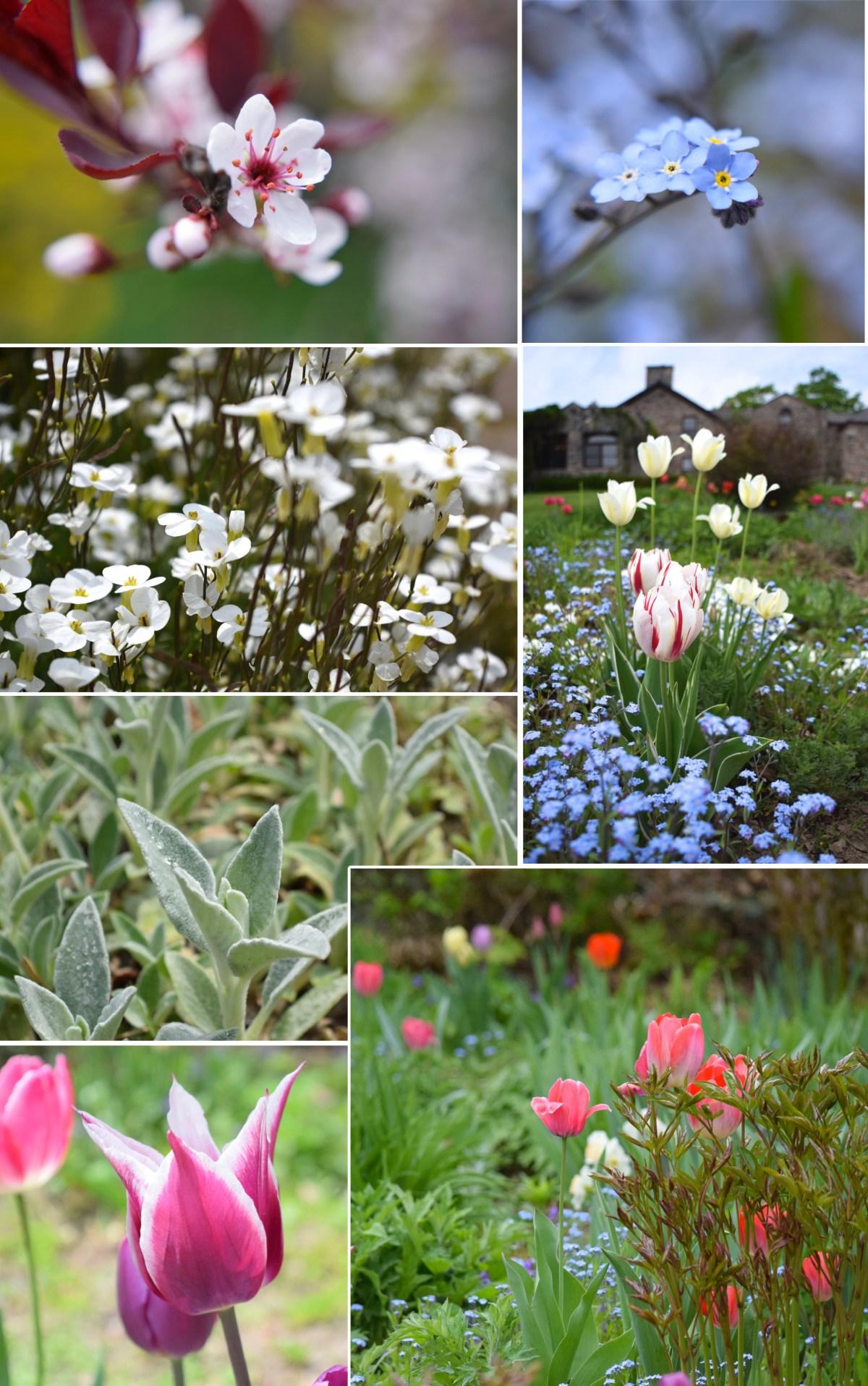 Ste Anne's flowers