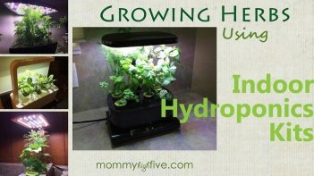 Growing Herbs using Indoor Hydroponic Kits