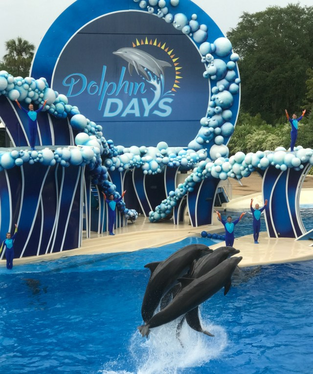 Dolphin-Days-Show-Sea-World