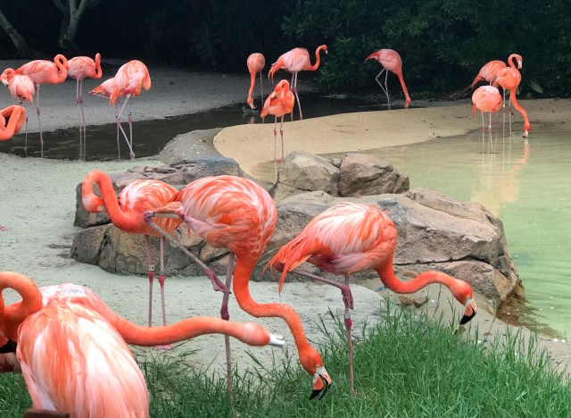 Flamingo-Sea-World-Orlando