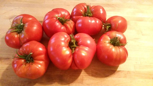 Home-grown Beefsteak tomatoes