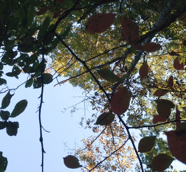 A view of the sky through the layers of changing leaves.