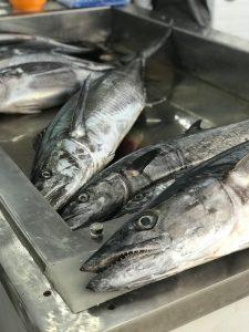 Vismarkt Oman