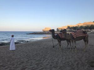 Kameel op strand Oman