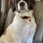 8 Tips for Long Car Journeys with your Pet