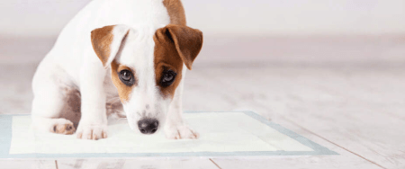 Housebreaking Getting You Down? Try an Innovative Pee Pad