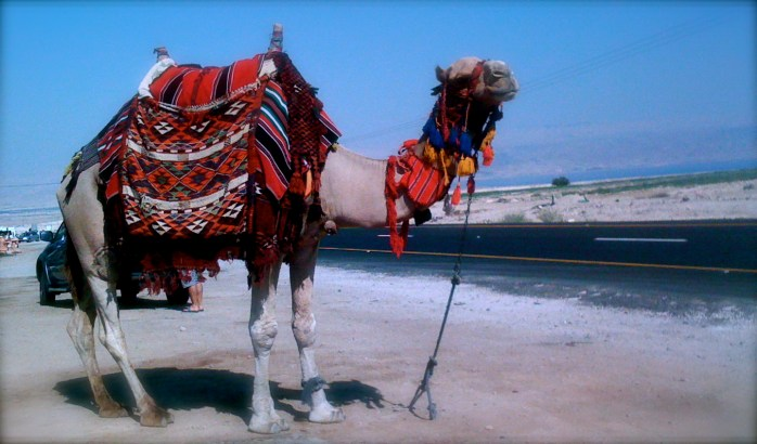 Need to travel camel