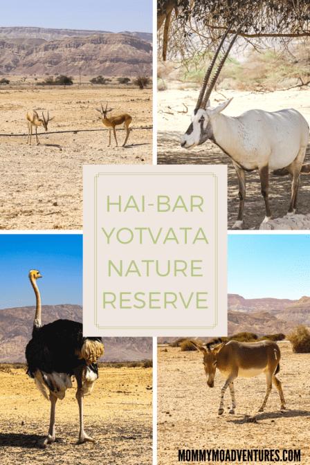 hai-bar yotvata nature reserve