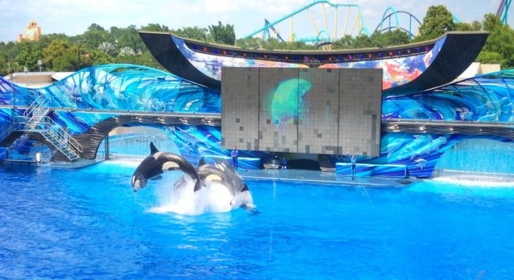 Visiting SeaWorld with young kids Shamu One Ocean Show