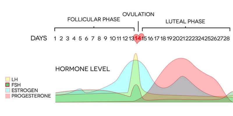 symptoms-hormone-imbalance