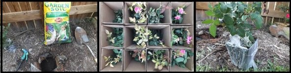 Planting the garden plants