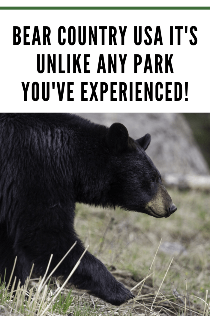 Bear Country USA eight miles beyond Rapid City's city limits, visitors can discover the world's largest collection of privately owned black bears.