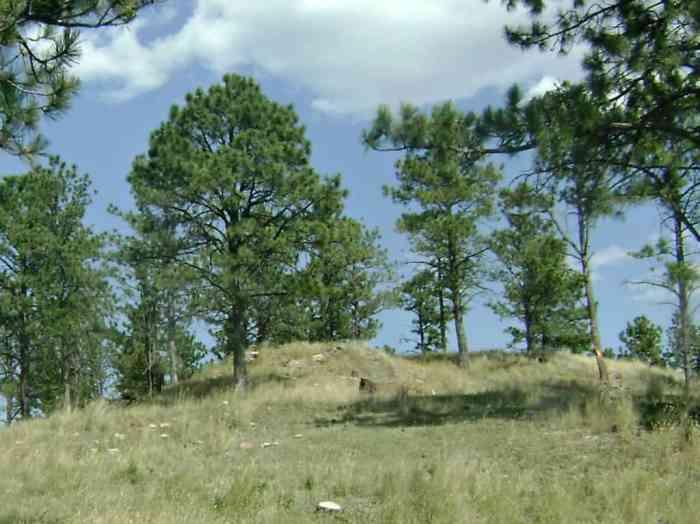 doe elk at Bear Country USa