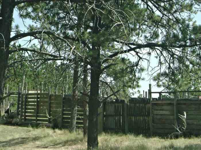 elks at Bear Country USA