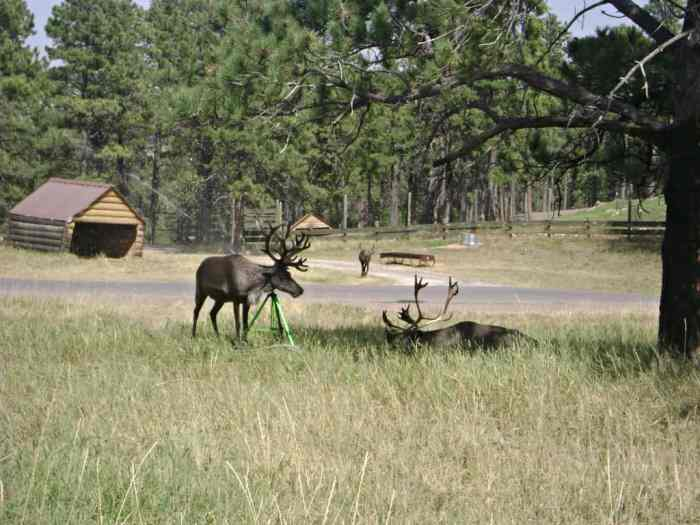 reindeer playing in sprinkler