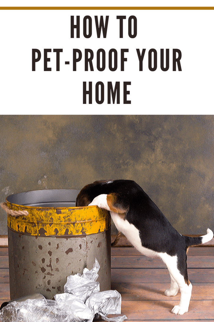 A hyper puppy can easily knock over a trash can and spread garbage and bacteria throughout your home.