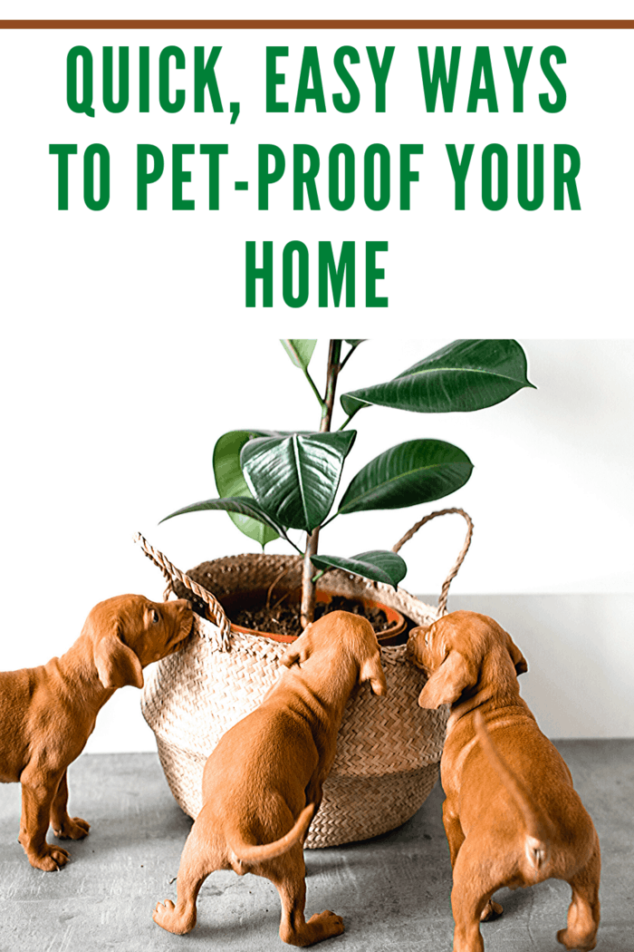 Plants can be poisonous for pets, so be cautious when placing holiday wreaths, flowers, and plants around the house where your dog can easily access them.