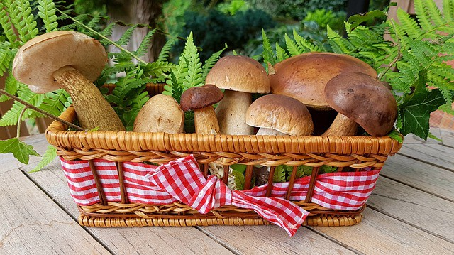 mushroom in a basket 8 Foods To Eat If You Have Gum Disease