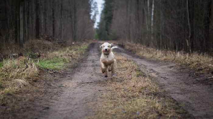 dog running because he loves his vegan dog food